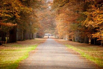 Plakat Autumn Forrestpath