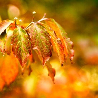 Plakat Autumn Leaves