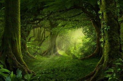 Plakat Azjatycki tropikalny las deszczowy