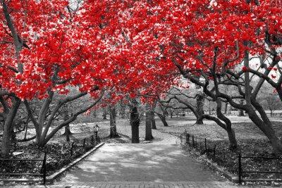 Plakat Baldachim czerwoni drzewa w surrealistycznej czarny i biały krajobrazowej scenie w central park, Miasto Nowy Jork