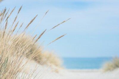 Plakat Baltic sea dunes over blue coastline background