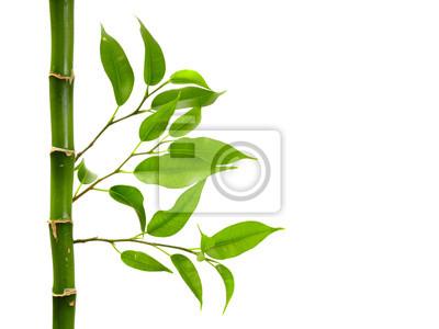 Plakat bambus