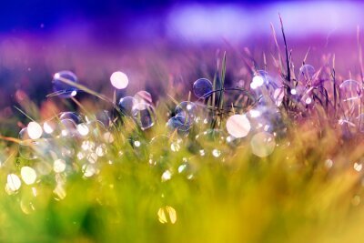 Plakat beautiful background with festive multicolored, soap bubbles and circles lie and shimmer on the green shiny grass on the summer fairy lilac meadow