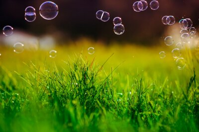 Plakat beautiful festive colorful, soap bubbles fly and shimmer over the green grass in the summer fairy meadow