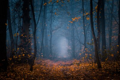 Plakat Beautiful, foggy, autumn, mysterious forest with pathway forward. Footpath among high trees with yellow leaves.