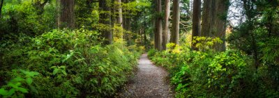 Plakat Beautiful forest path as panorama background