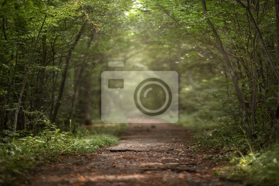 Plakat Beautiful green summer forest. Spring background, backdrop
