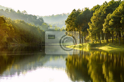 Plakat Beautiful landscape view of pine forest tree and lake view of reservoir.