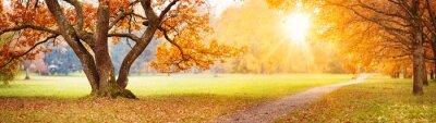 Plakat Beautiful oak tree in the autumnal park