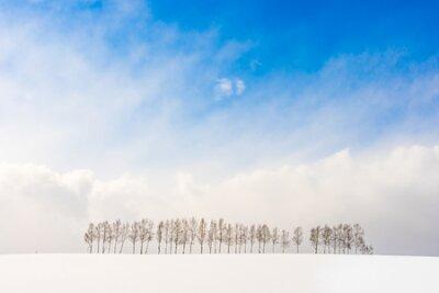 Plakat Beautiful outdoor nature landscape with group of tree branch in snow winter season Hokkaido Japan