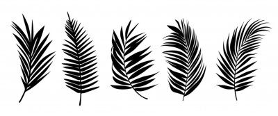 Plakat Beautiful palm tree leaf set silhouette background vector illustration