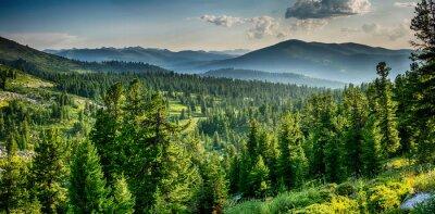 Plakat Beautiful sunset view in cedar forest in front of sayan mountain range, Ergaki national park, Krasnoyarsk region, Siberia, Russia