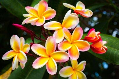 Plakat Beautiful Tropical Flowers in Hawaii
