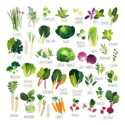 Plakat Big clipart kolekcji z różnych rodzajów warzyw i wspólnych kulinarnych ziół