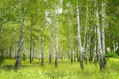 Plakat Birchs