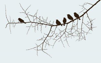 Plakat birds on a twig