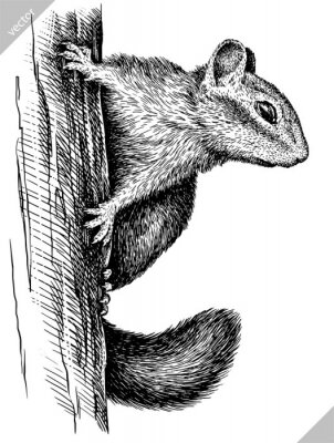 Plakat black and white engrave isolated chipmunk vector illustration