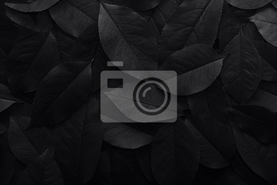 Plakat Black background. Background from autumn fallen leaves closeup. Black and white photo.
