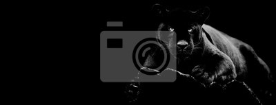 Plakat Black jaguar with a black background