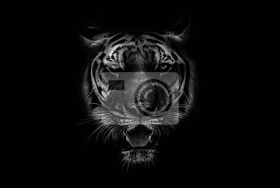 Plakat Black & White Beautiful tiger on black background