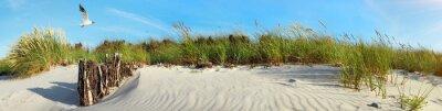 Plakat Blatic Sea Beach with Seagull near Sunset - Panorama