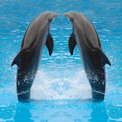 Plakat bliźniaki delfinów