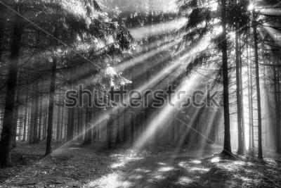 Plakat Bóg belki - iglasty las wczesnym rankiem