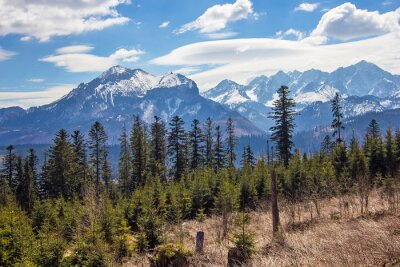 Plakat Breathtaking view on High Tatry mountains with snowy peaks and green spruce and pine forest on foreground, High Tatras near Zakopane, Poland. Travel and vacation concept. Love mountains