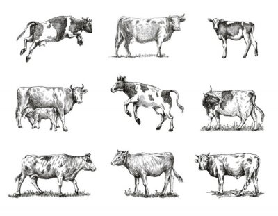 Plakat breeding cow. animal husbandry. sketches on a grey background