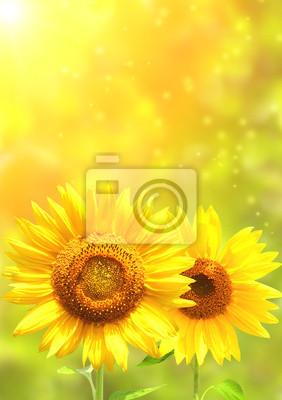 Plakat Bright yellow sunflowers