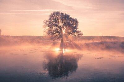 Plakat Bright zimowe słońce świeci przez drzewa mroźny