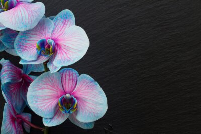 Plakat Bukiet fioletowych storczyków