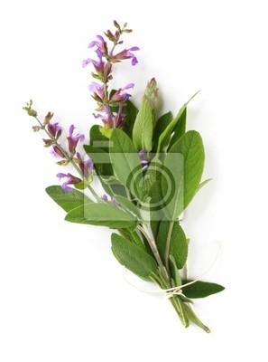 Plakat Bukiet kwitnienia szałwia, związane sznurkiem kuchni.