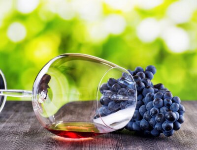 Plakat Bunch of grapes and glass of red wine lying on a black wooden ta