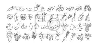 Plakat Bundle of vegetables, cultivated root crops, salads, spicy herbs drawn with contour lines on white background. Set of natural design elements. Monochrome vector illustration in line art style.