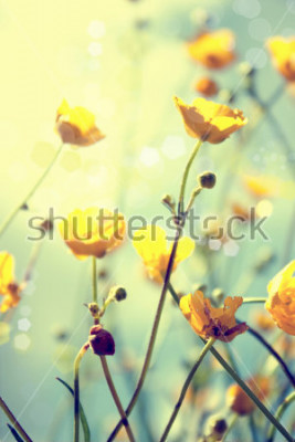 Plakat  buttercup. yellow flower