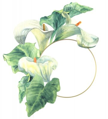 Plakat Calla lilies watercolor hand-painted illustration with frame