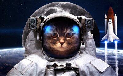 Plakat Cat Astronauta w przestrzeni kosmicznej. Spacewalk. Elementy tego zdjęcia dostarczone przez NASA