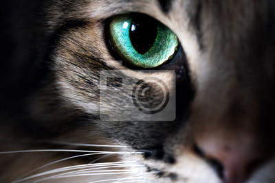 Plakat Cat eye macro closeup animal