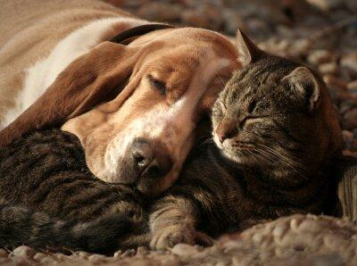 Plakat Cat pillow, dog blanket