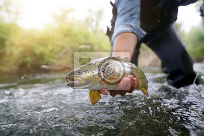 Plakat catching a brown trout in the river