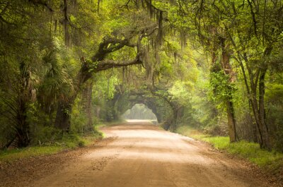 Plakat Charleston SC Dirt Forest Road Spanish Moss South Edisto