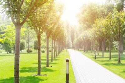 Plakat Chodnik w parku