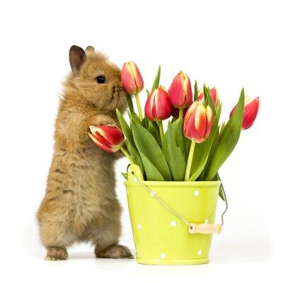 Plakat ciekawy królik dziecko