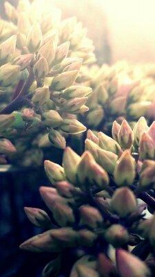 Plakat Close-up Of Flowers