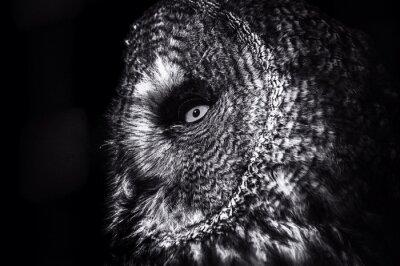 Plakat Close-up Of Owl Outdoors