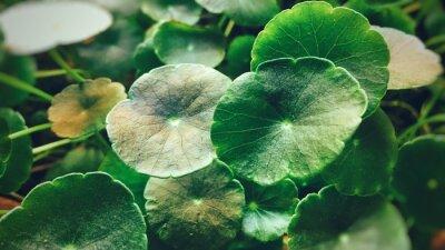 Plakat Close-up Of Plant