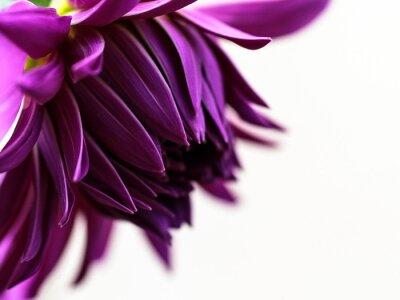 Plakat Close-up Of Purple Flower