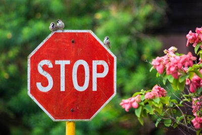 Plakat Close-Up Of Stop Sign Against Blurred Background