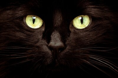Plakat Close-up Portrait Of Black Cat With Green Eyes